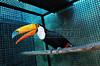 CETAS RJ Centro de Triagem de Animais Silvestres - Tucano, Pendotiba, Rio de Janeiro, Brasil, Maio 9, 2012.  (Austral Foto/Renzo Gostoli)