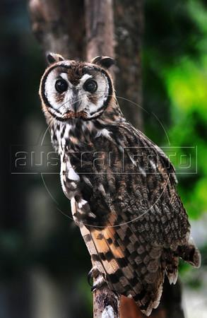 CETAS RJ Centro de Triagem de Animais Silvestres - Coruja, Pendotiba, Rio de Janeiro, Brasil, Maio 9, 2012.  (Austral Foto/Renzo Gostoli)