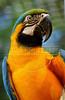 CETAS RJ Centro de Triagem de Animais Silvestres - Arara, Pendotiba, Rio de Janeiro, Brasil, Maio 9, 2012.  (Austral Foto/Renzo Gostoli)
