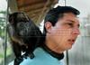 CETAS RJ Centro de Triagem de Animais Silvestres - Daniel Marchesi Neves, responsavel pelo CETAS RJ com um filhote de macaco em Pendotiba, Rio de Janeiro, Brasil, Maio 9, 2012.  (Austral Foto/Renzo Gostoli)