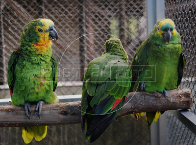 CETAS RJ Centro de Triagem de Animais Silvestres - Papagaios, Pendotiba, Rio de Janeiro, Brasil, Maio 9, 2012.  (Austral Foto/Renzo Gostoli)