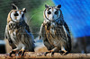 CETAS RJ Centro de Triagem de Animais Silvestres - Corujas, Pendotiba, Rio de Janeiro, Brasil, Maio 9, 2012.  (Austral Foto/Renzo Gostoli)