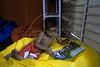 """Crianca le na biblioteca dirigida por Otavio Cesar Junior """"O livreiro do Alemao"""", fundador do projeto """"Ler  é Dez – Viva Favela!"""" no Complexo do Alemao, Rio de Janeiro, Brazil, junho 24, 2011. (Austral Foto/Renzo Gostoli)"""