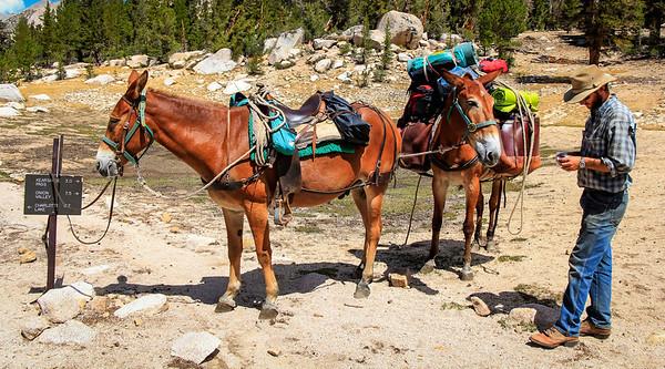 Horsepacker