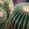 John Peterson-Cactus