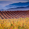 Santa Ynez Vineyards in the Fall