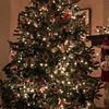 JeffBonta-Christmas Tree