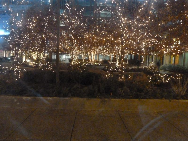 Rich Boyle - Christmas Trees