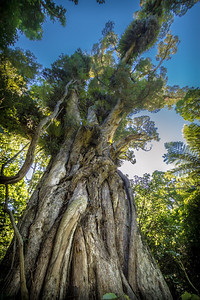 Ratanui Bushy Park  --- Paul Willyams Photography