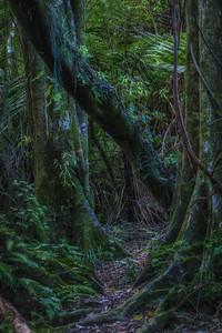 The bush at Bushy Park Bushy Park  --- Paul Willyams Photography
