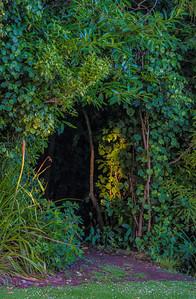 Entrance to a bush track Bushy Park  --- Paul Willyams Photography