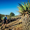 Hiking Past Aloes