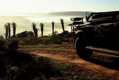 Aloe Drive