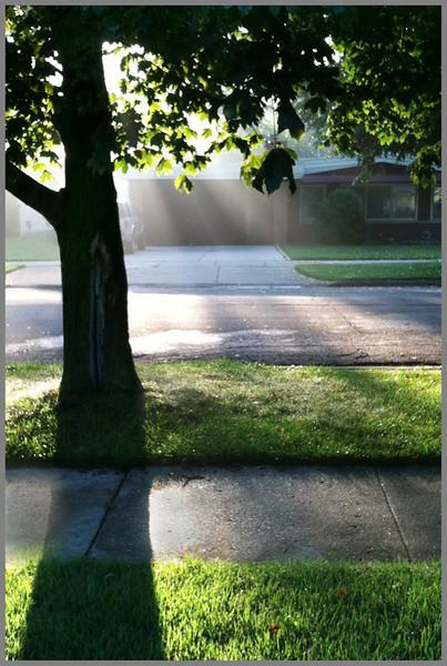 Sharon Peterson - Morning Light