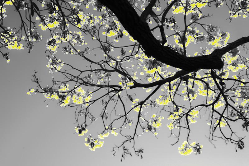 Nora_Liu_-2-_Flowers_in_the_sun