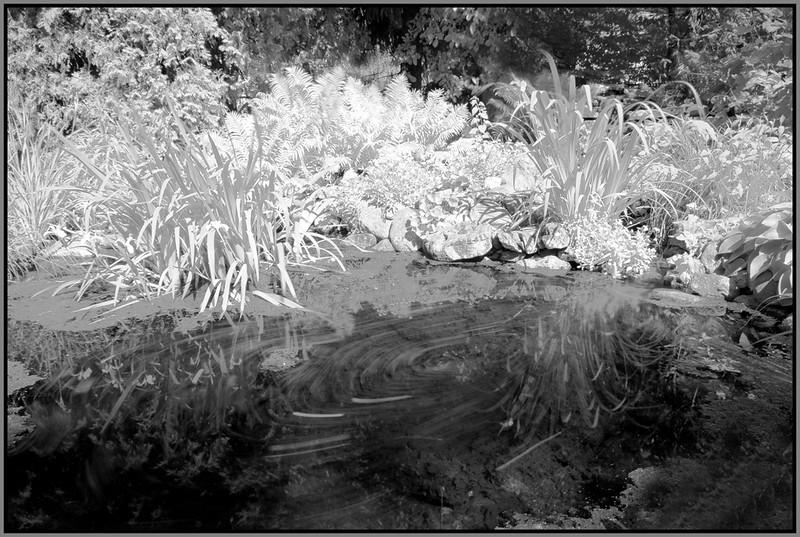 John Peterson-Swamp Garden