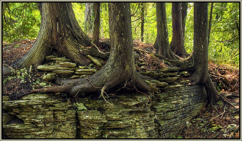 Marie Rakoczy - Taking Roots