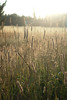 Suzanne Maso Summer2012 field grass