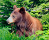 kathy zelm momma bear-glaicer
