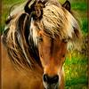 Equine Beauty<br /> Marie Rakoczy
