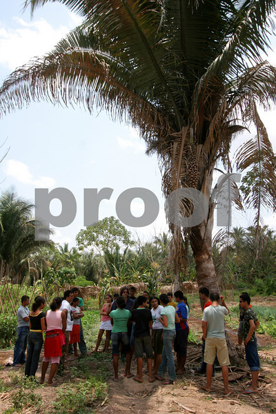Students stand under a babassu palm at the Escola Familia Agricola Antonio Fontenele (EFA) near Lago do Junco in Brazil's northeastern state of Maranhao. Students, many who come from far away, alternate living at the school and at home in 14 day periods. The school is supported by the Association of Land Reform Settlements of Maranhao State (ASSEMA), an umbrella NGO of associations operated for and by rural peasants and babau nut crackers. Founded in the late 1980s as a result of land conflicts in the region, It's main goal is to improve living conditions in the countryside by promoting local and family oriented agricultural production, while using and preserving the babassu palm trees. British NGO Action Aid has helped support ASSEMA since 1999 - in particular the Escola Familia Agricola Antonio Fontenele (EFA). (AustralFoto/Douglas Engle)