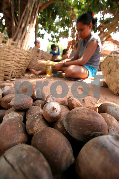 a woman shells babassu nuts in the countryside of Brazil's northeastern sate of Maranhao. The babassu palm, native to this northeastern corner of Brazil, is an important part of the local culture and economy - more than 60 products come from it including oil used for cooking and cosmetics as well as the nutshell which is used as cooking fuel. The Association of Land Reform Settlements of Maranhao State (ASSEMA) is an umbrella NGO of associations operated for and by rural peasants and babassu nut crackers, which British NGO Action Aid has helped support ASSEMA since 1999.(AustralFoto/Douglas Engle)