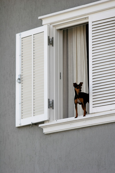 One of the dogs of Colombian drug lord Juan Carlos Ramirez Abadia appears in the window of his home in Aldeia da Serra, near Sao Paulo, Brazil. Abadia, known as Chupeta or Lollypop, suspected of ordering hundreds of murders in Colombia and the US, was detained by the Brazilian Federal Police as part of a major drugs investigation. The US state department describes him as one of the most powerful and elusive Colombian drug traffickers.(Australfoto/Douglas Engle)