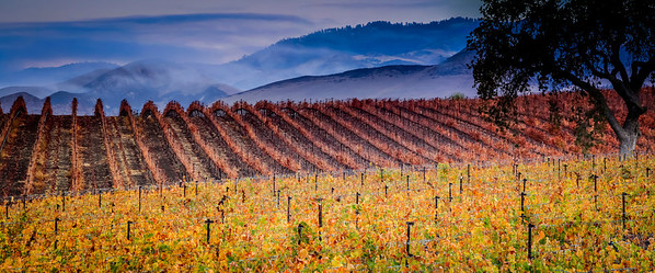 Autumn in the Vineyards