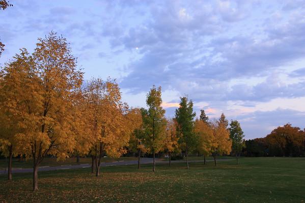 Golden Trees in Evening