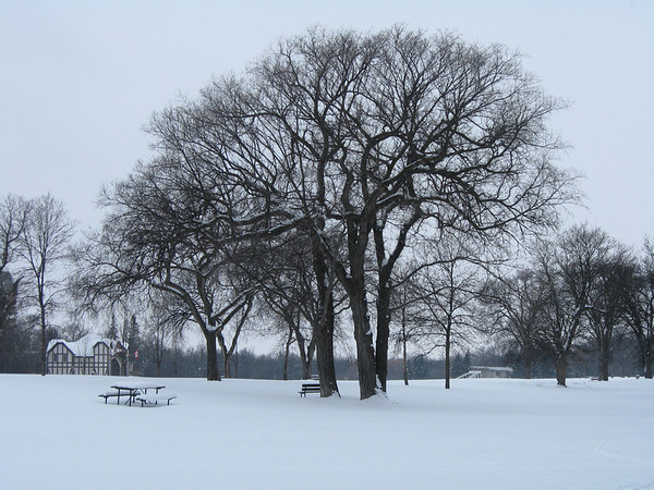 Winter in Assiniboine Park