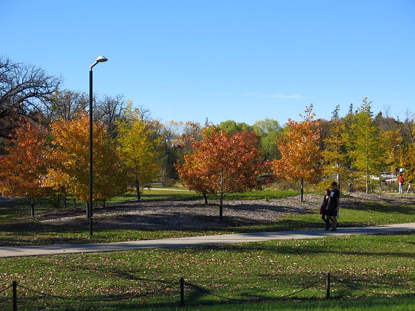 Blazing Foliage Near Duck Pond