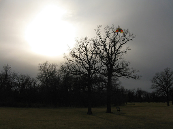 Kite in Autumn
