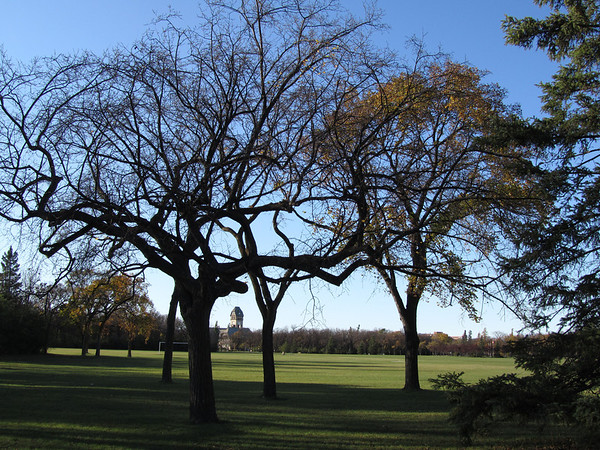 Pavilion Through Leafless Trees