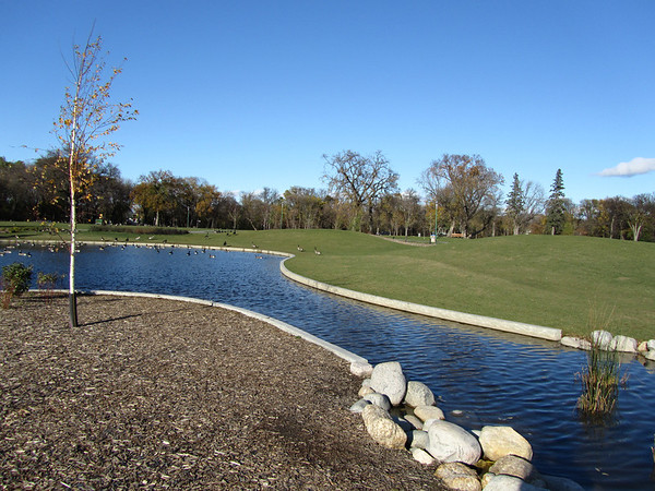 Duck Pond on Clear Day