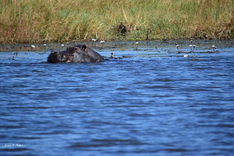 DSC_0995 w Hippo