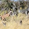 DSC_0197 w Kudu & Zebra