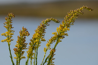 Weeds growing near the edge of the water near a bayou.