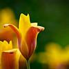 sun bliss flowers