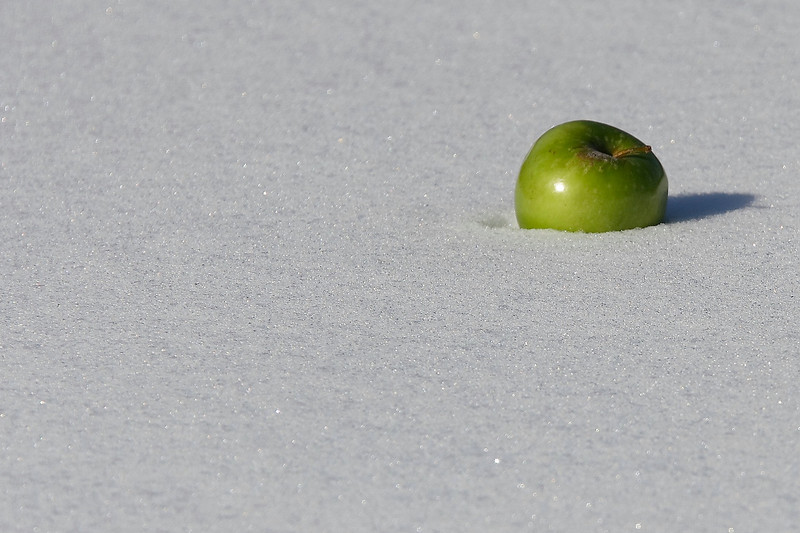 Abstract...for me, it's nothing more than the bright green color against freshly fallen snow.