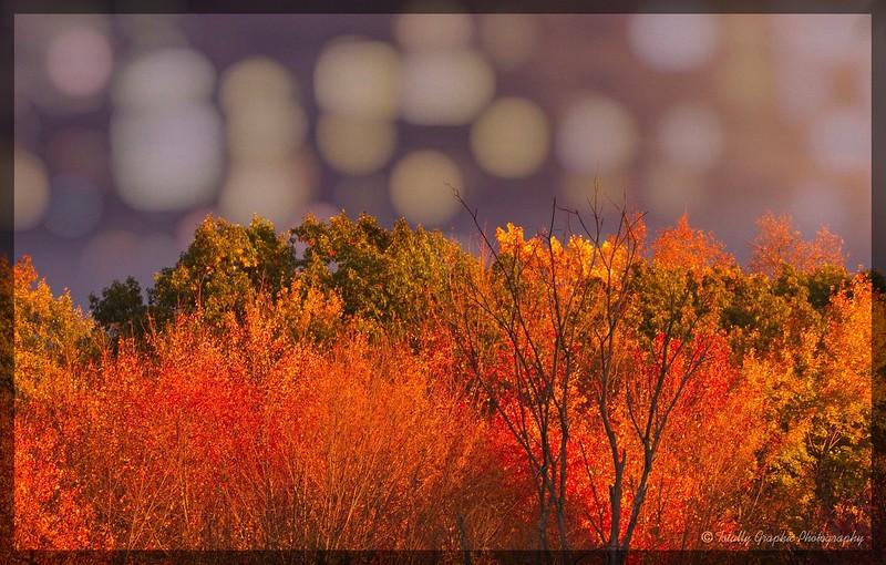 Autumn in the Bokeh Mountains