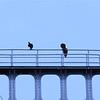 Turkey Vulture's atop the old Port Ewen Bridge!