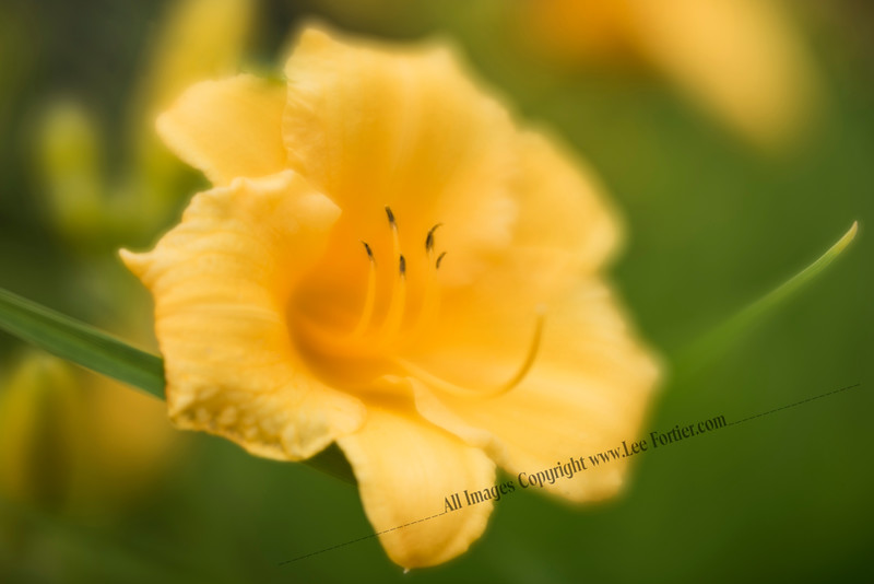 Danni's Yellow Flower