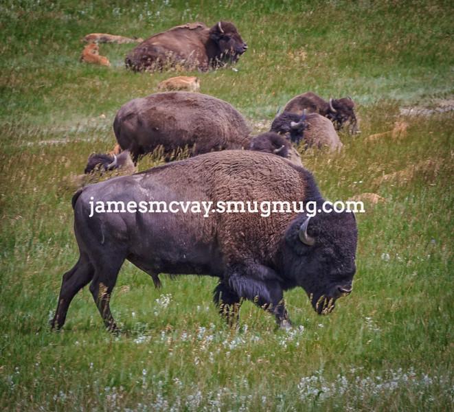 South Dakota - Black Hills Region