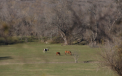 Horses in field, Sunnyvale, Texas