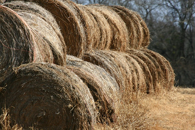 Haybales at Sunnyvale, Texas