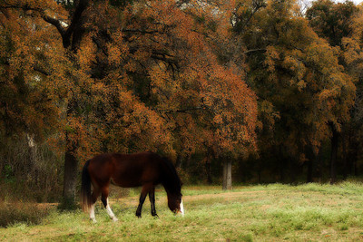 Horse in field of fall colors