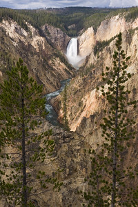 Lower Falls - Yellowstone National Park, WY