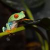 Tree Frog At West Lebanon Pet & Aquarium