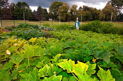 20140912 ABVM Garden-1402 darkened levels