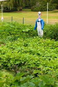 20140912 ABVM Garden-1410